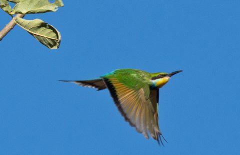 Discovering the Birds of Gonarezhou