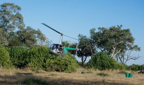 Helicopter over Linyanti