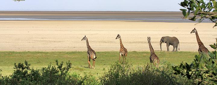 Lakeshore - Lake Manyara