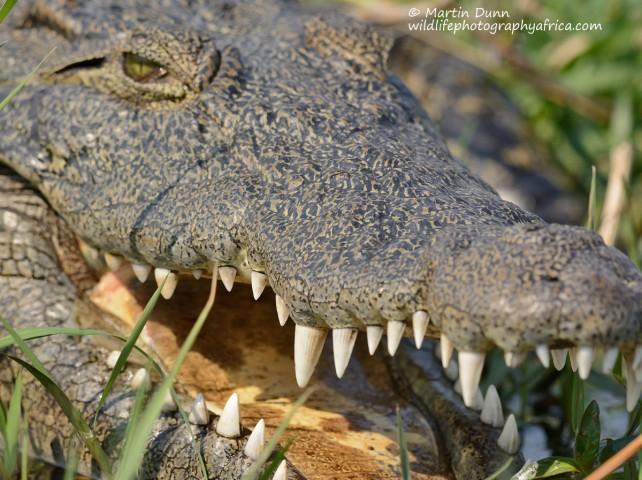 What white teeth!
