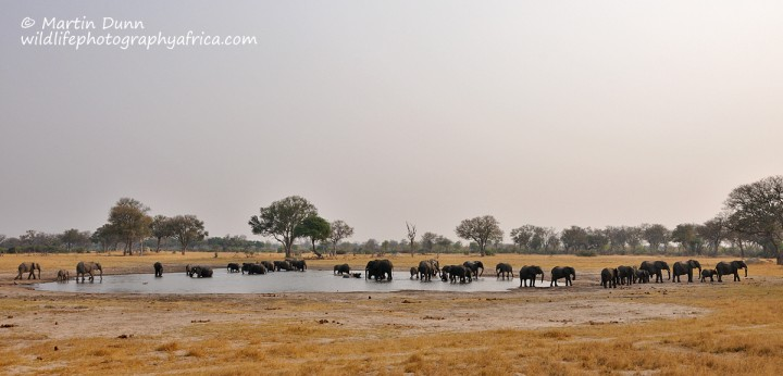 Elephants - Hwange NP