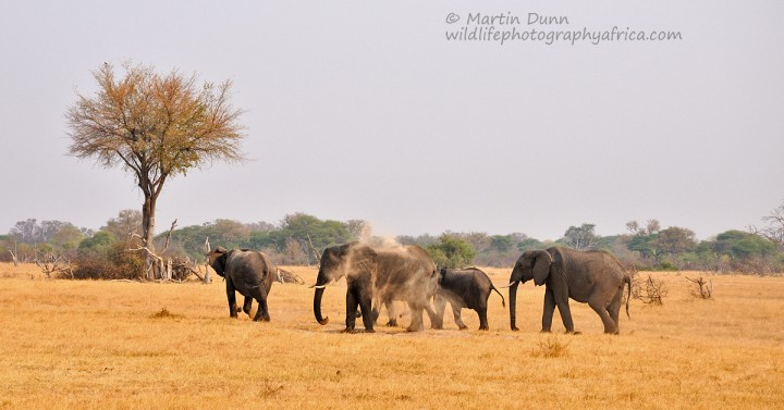 Elephants taking a sand shower - Hwange NP