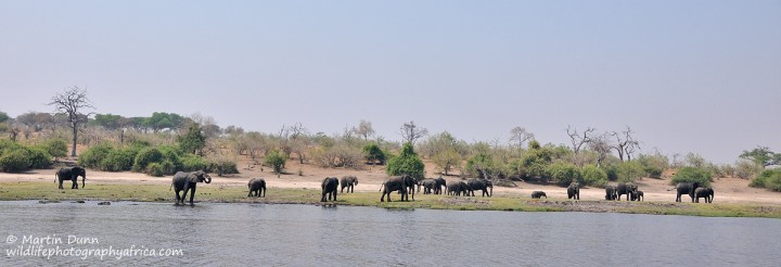 Chobe NP - a typical riverside scene