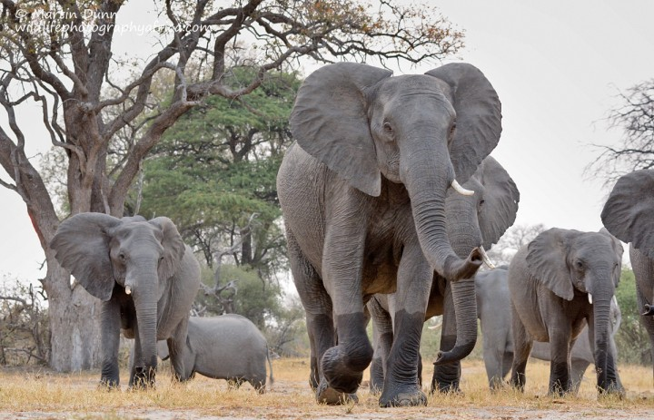 Elephants approach the 'Look Up' - hwange NP