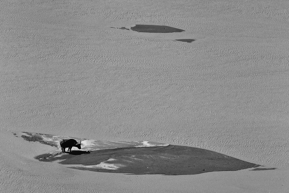Buffalo viewed from Shaka's Rock - Low Key