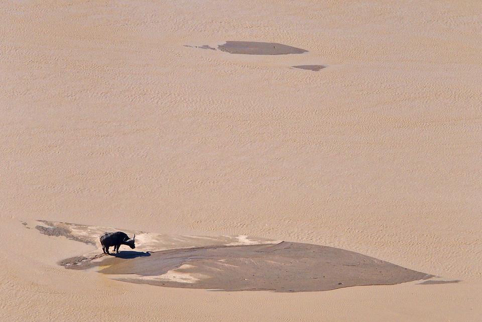 Buffalo, viewed from Shaka's Rock