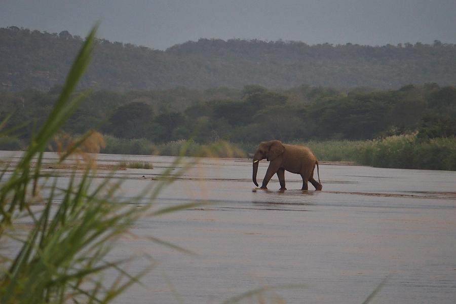 Elephant crossing the White Umfolozi