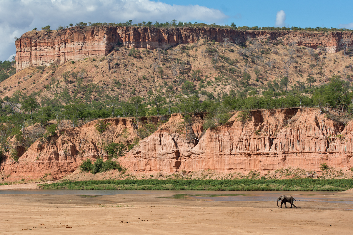 elephant walking below Chilojo cliffs, Gonarezhou NP
