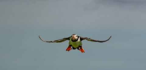 Fabulous Farne Islands – Open Air Classroom