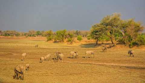 Choosing the right lenses for your safari