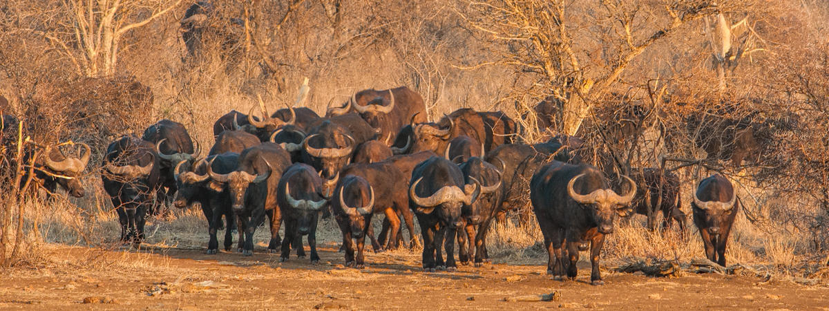 Wildlife Photography Africa