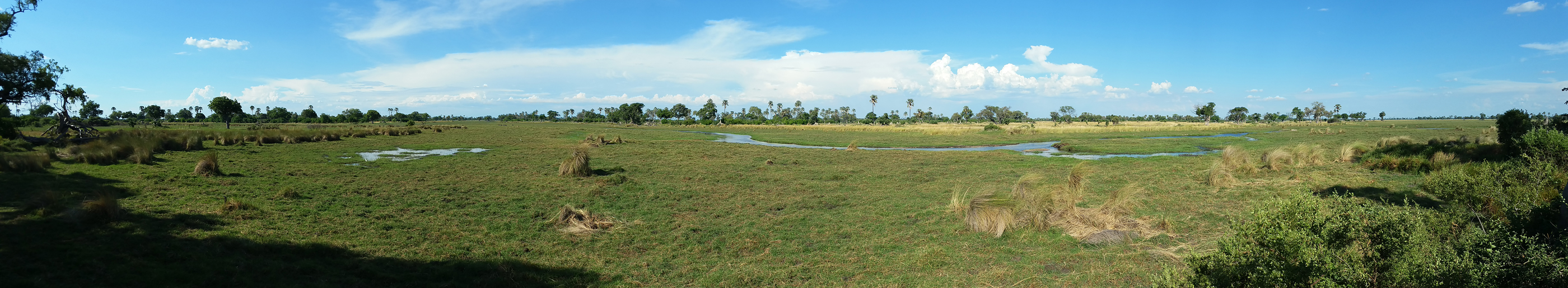 Flood plain in front of Delta Camp, Okavango Delta, panorama