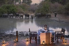 elephants across the pan at kanga camp, mana pools np