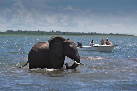 game viewing by boat, lake kariba