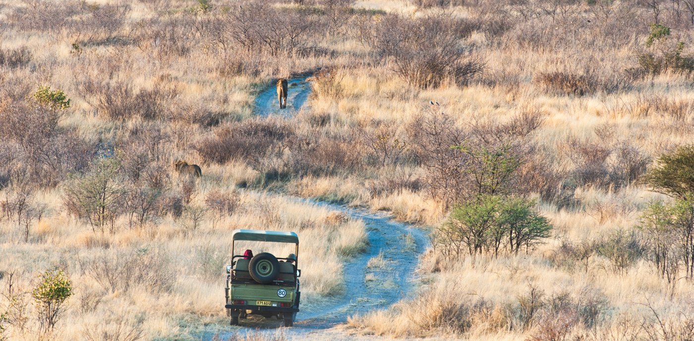 Tau Pan, vehicle tracking lion in Kalahari