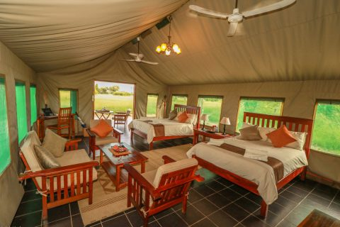 Guest tent Interior, Bomani Tented Lodge, Hwange NP
