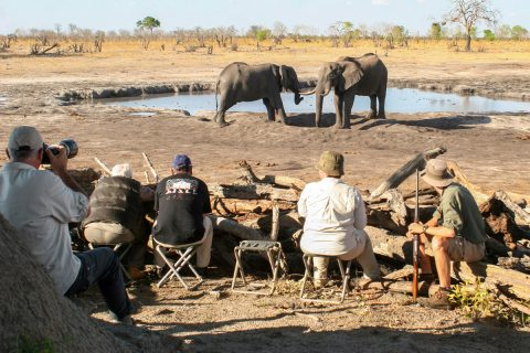 photographing elephants at camp hwange waterhole