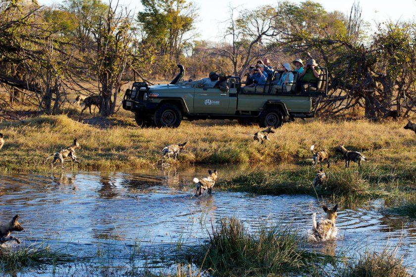 wild dogs, okavango delta