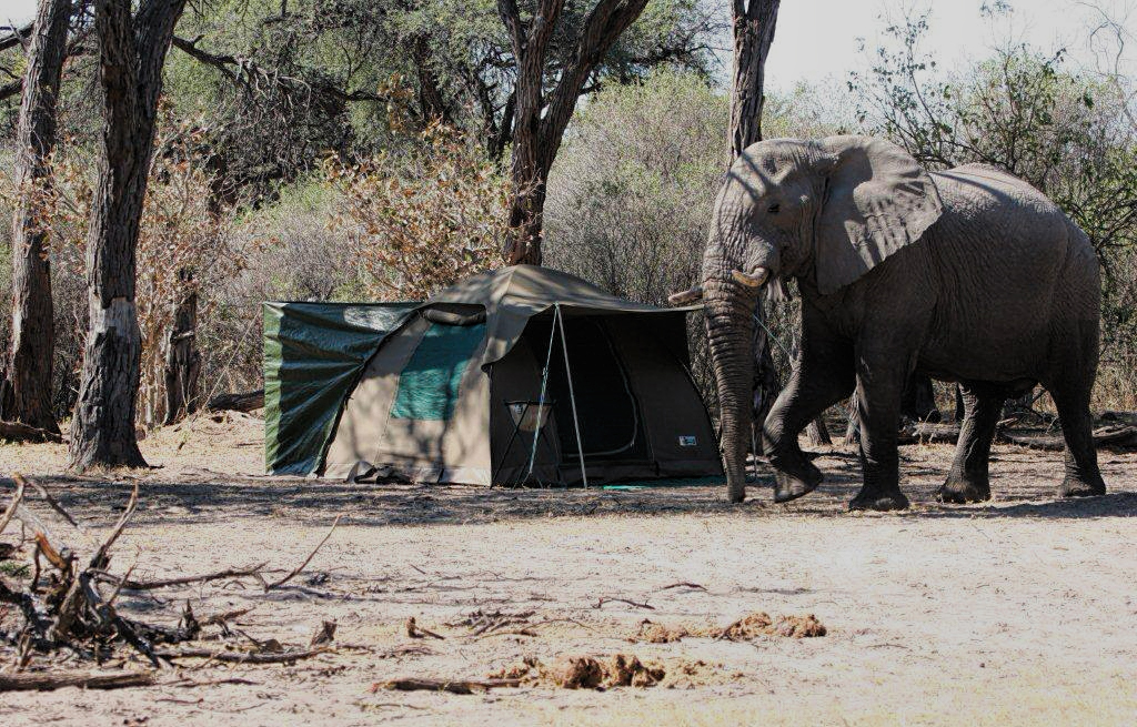 elephant walking past tent