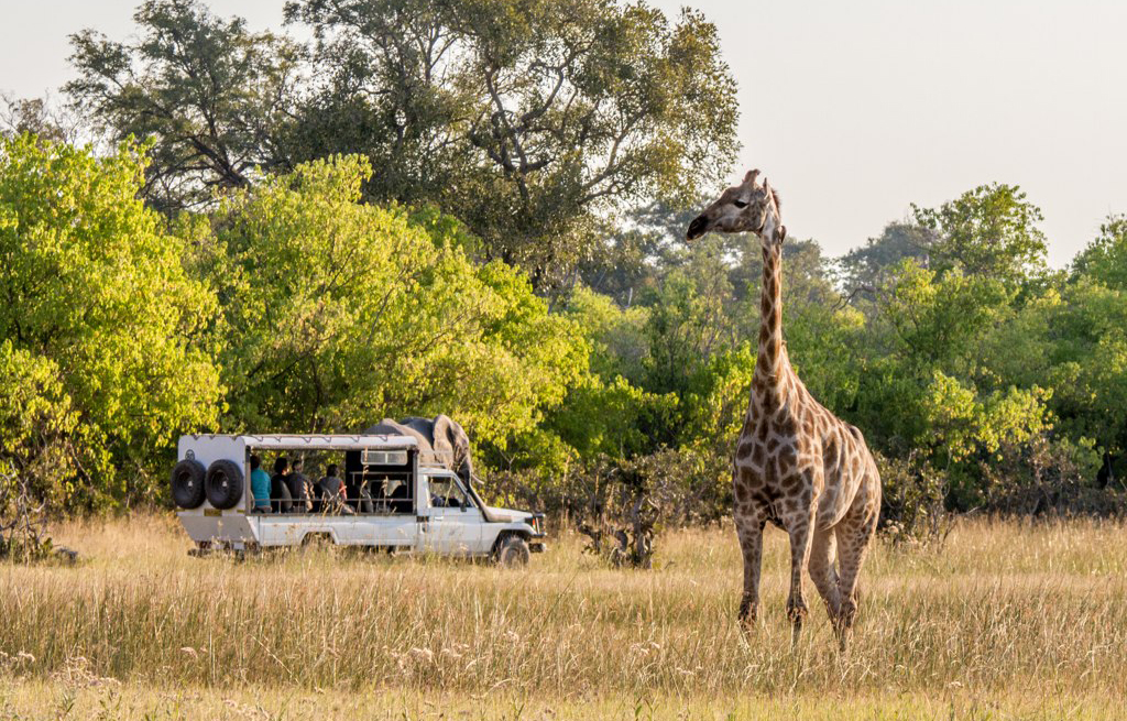 giraffe and game vehicle