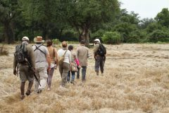 foot safari mana pools np