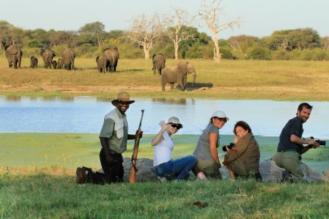 Viewing elephnat on foot, Hwange NP