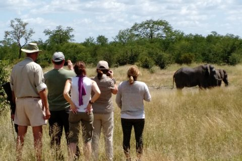 viewing elephants on foot, Hwange NP