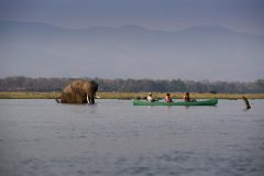 zambezi expeditions, canoeing with elephant