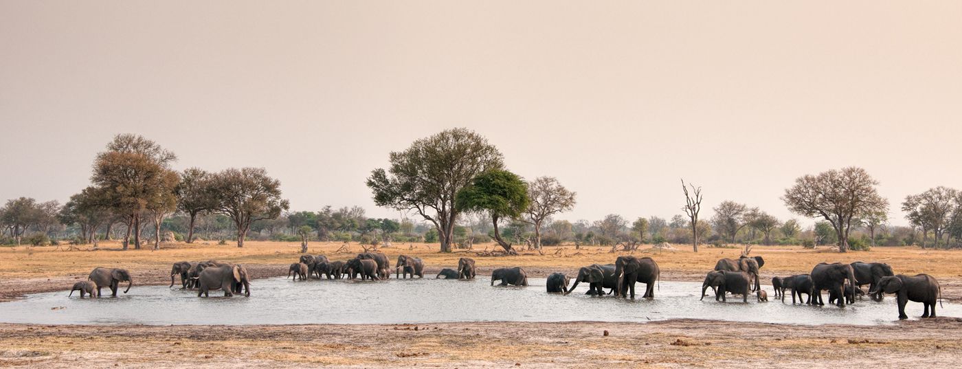 herd of elephants in pan at Ngamo, Hwange NP