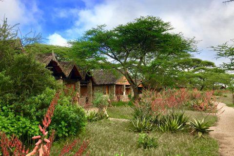 Ndutu Safari Lodge cottages