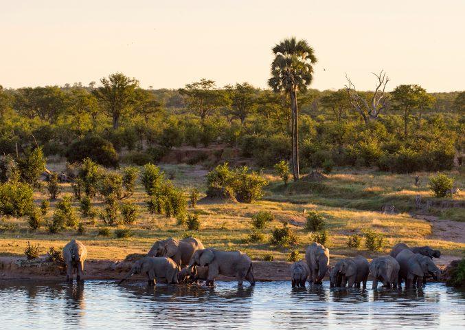 elephants at Mazuma pan