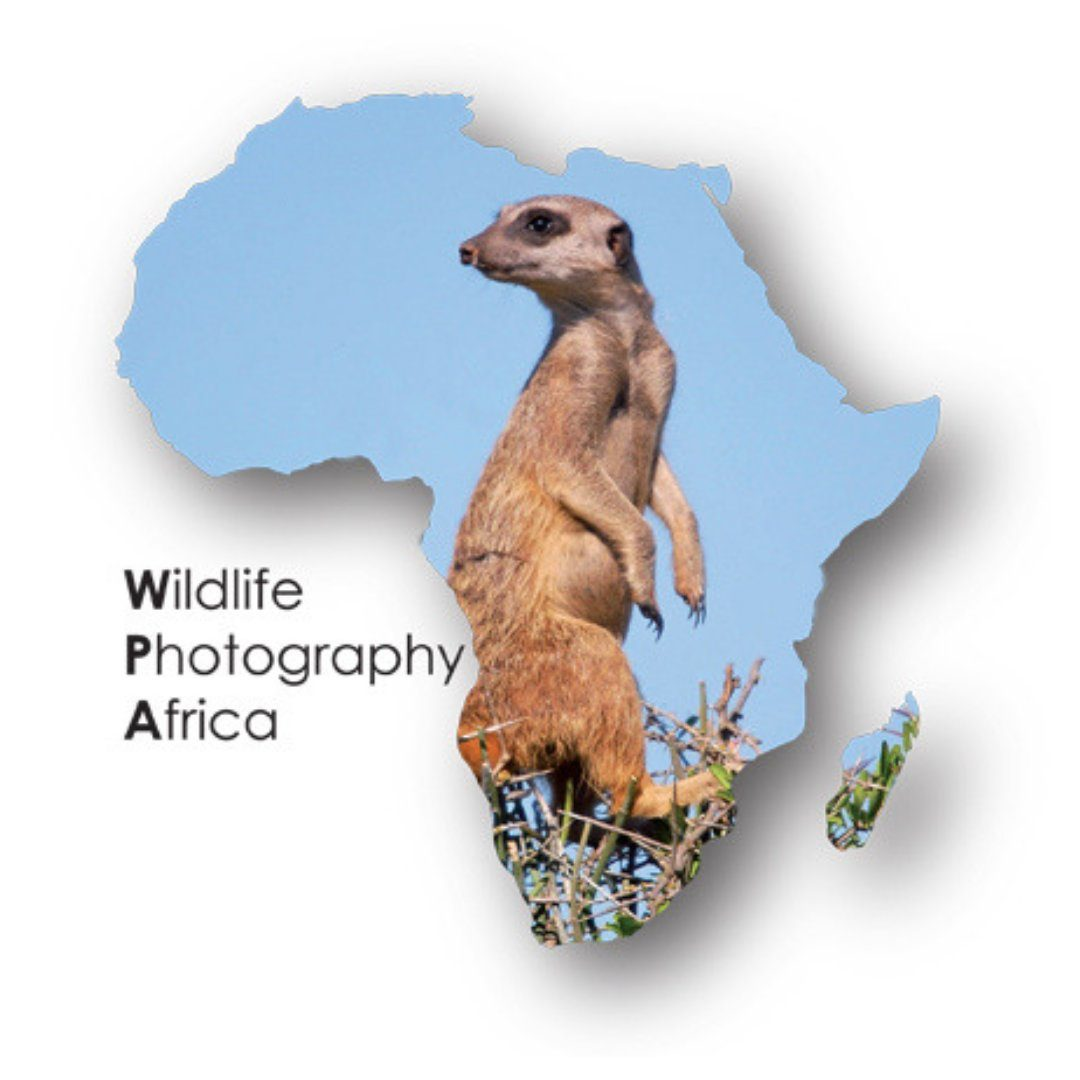 Wildlife Photography Africa